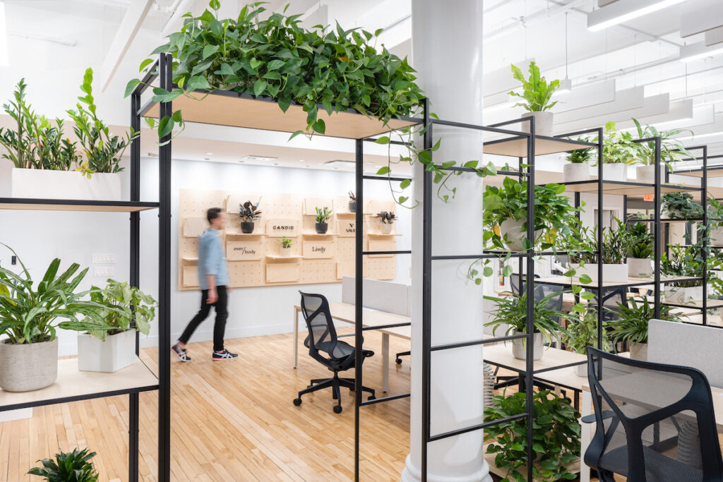 A Guide to Designing a Biophilic Office