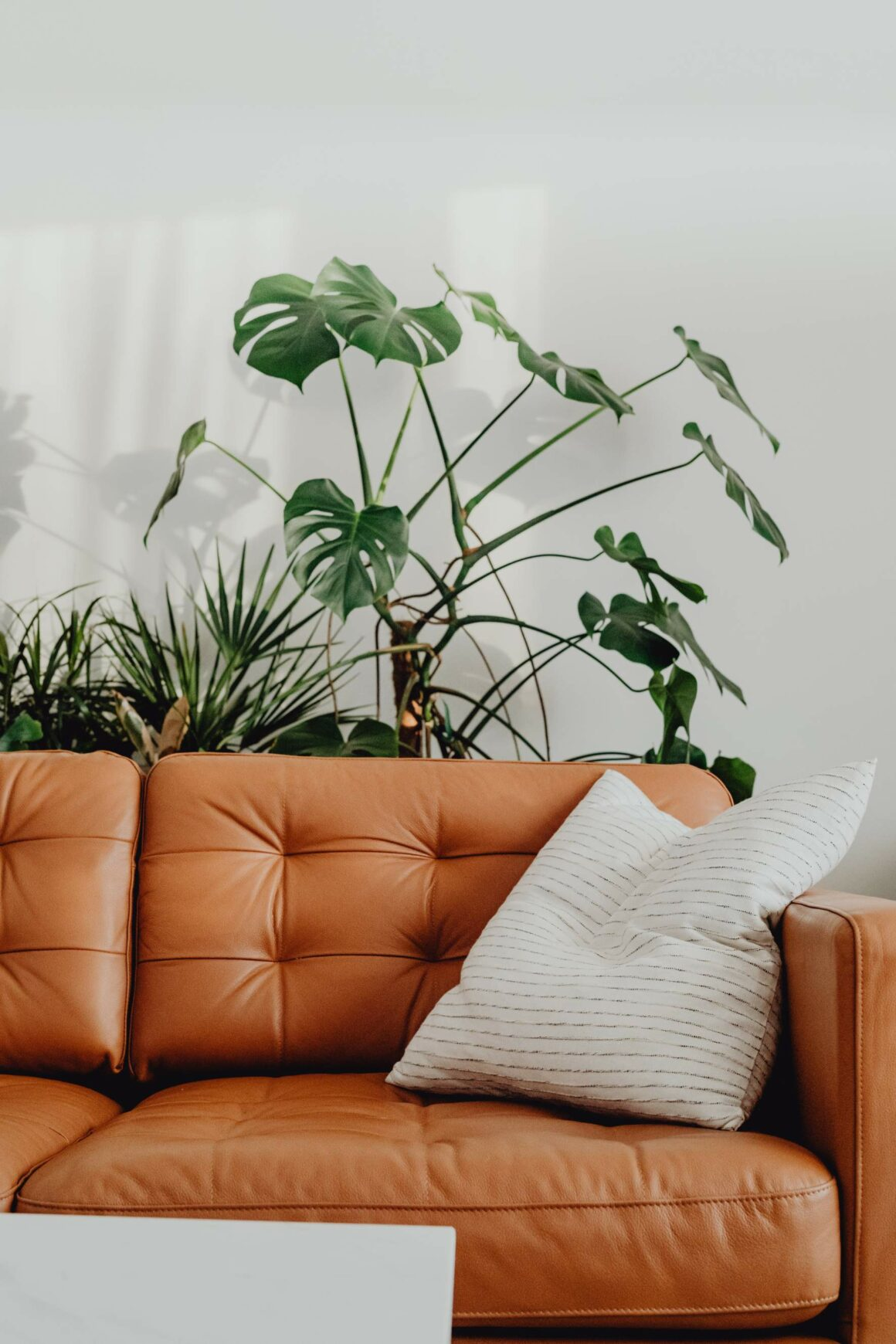 Starting a Minimalist Lifestyle: A Beginner's Guide - IANIKO